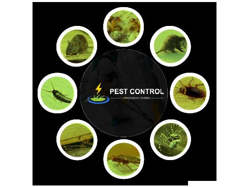 Pest Control Bridgeman Downs