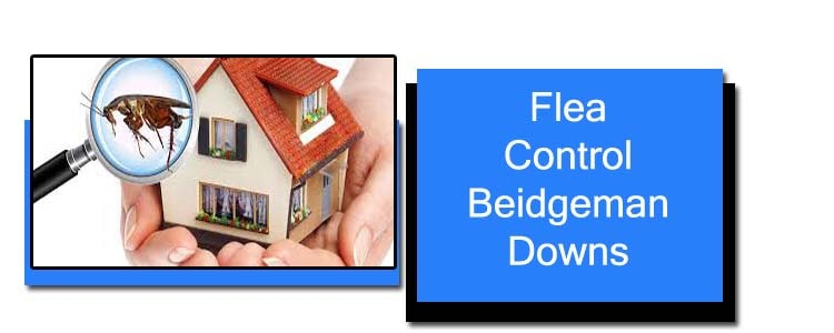 Flea Control Bridgeman Downs