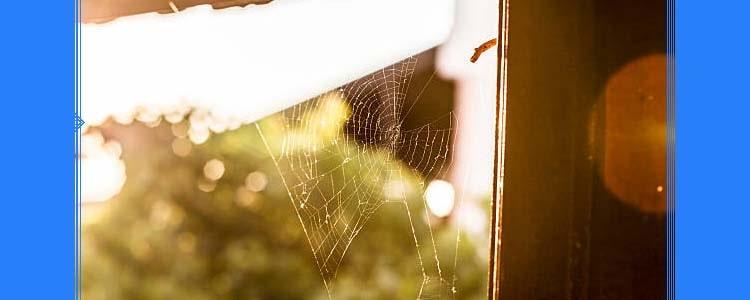 Spider Control Bridgeman Downs